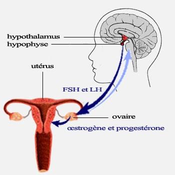 perturbation hormonale