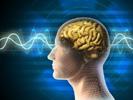 MS Gehirn Fakten